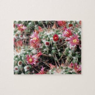 Pincushion Cactus Flowers Difficult Puzzle