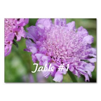 Pincushion Flowers Card