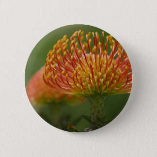 Pincushion Protea 2 Inch Round Button