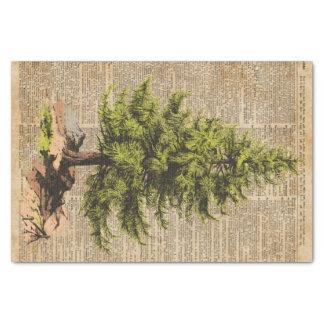 Pine,Cedar Tree,Christmas Tree Dictionary Art, Tissue Paper