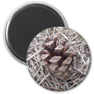 Pine Cone And Pine Needles Refrigerator Magnets