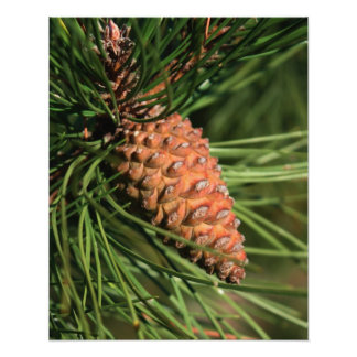 Pine Cone Close Up Art Photo