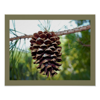 Pine Cone Poster