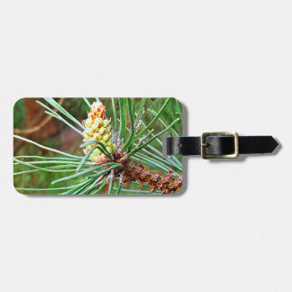 Pine cone tree brach luggage tag