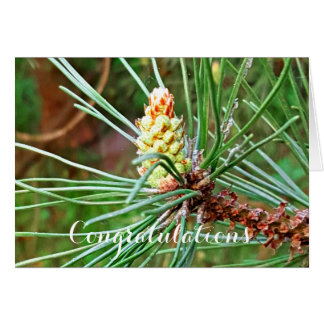 Pine cone tree needles photograph card