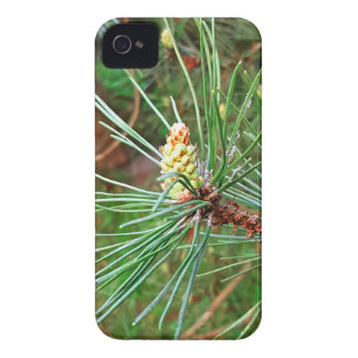 Pine cone tree needles photograph Case-Mate iPhone 4 case