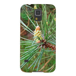 Pine cone tree needles photograph cases for galaxy s5