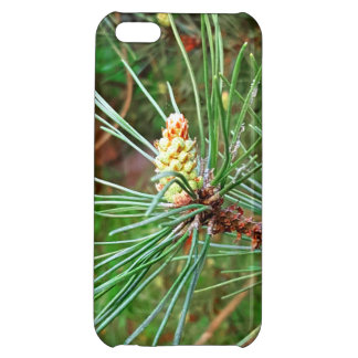 Pine cone tree needles photograph cover for iPhone 5C