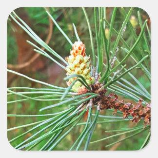 Pine cone tree needles photograph square sticker