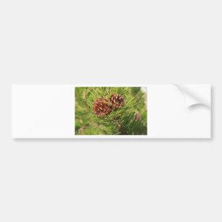 Pine cones bumper sticker