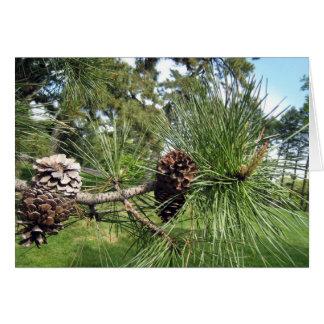 Pine Cones Card
