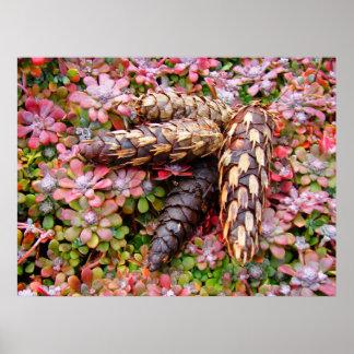 Pine Cones Decorative Art Prints Fine Photography Poster