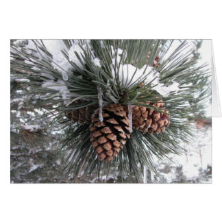 Pine cones in snow - Holiday Card