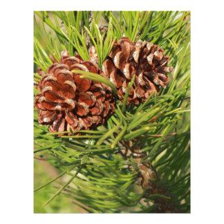 Pine cones letterhead