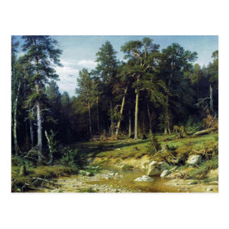 Pine Forest in Viatka Province Postcard