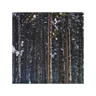 pine Forest with snow-Cyprus Canvas Print