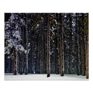 pine Forest with snow-Cyprus Poster