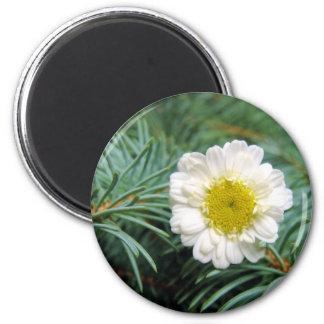 Pine Fresh Daisy 2 Inch Round Magnet