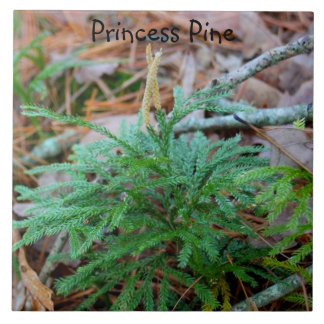 Pine Princess Ceramic Tile