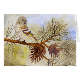 Pine Siskin -Songbird Card