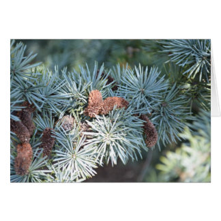 pine tree and cones card