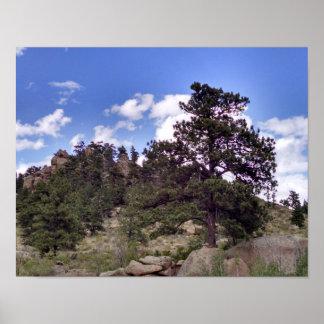 Pine tree grows among Sherman granite Poster