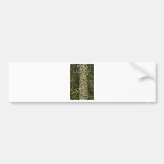 Pine_Tree_Moss Bumper Sticker