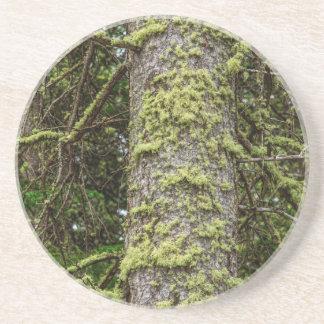 Pine_Tree_Moss Coaster