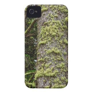 Pine_Tree_Moss iPhone 4 Covers