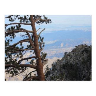 Pine tree on the Mountain Postcard