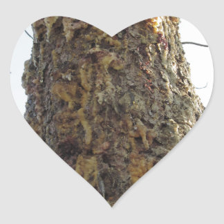 Pine tree resin on the trunk heart sticker