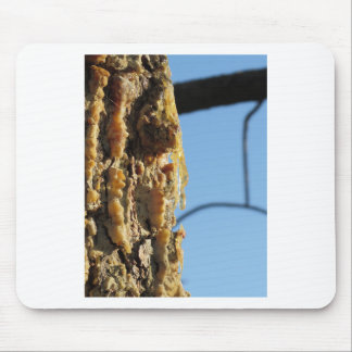 Pine tree resin on the trunk mouse pad