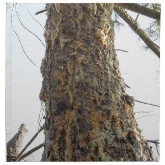 Pine tree resin on the trunk napkin