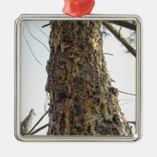 Pine tree resin on the trunk Silver-Colored square ornament