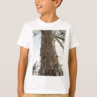 Pine tree resin on the trunk T-Shirt