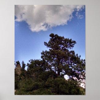 Pine trees against hillside, Colorado Poster