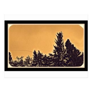 Pine Trees in Denver, CO Postcard
