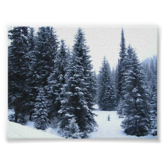 Pine Trees in Winter Poster