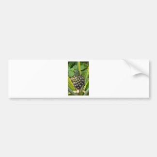 Pineapple Bumper Sticker