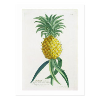 Pineapple engraved by Johann Jakob Haid (1704-67) Postcard