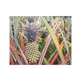 Pineapple Field, Pineapple, Photography Canvas Print