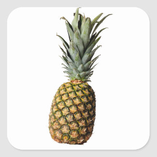Pineapple Square Sticker