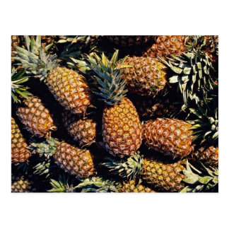 Pineapples, Tulum, Mexico Postcard