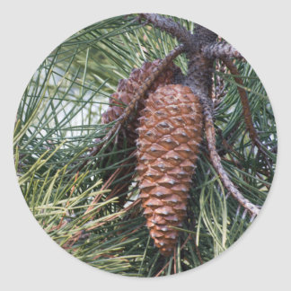 Pinecone on the pine tree classic round sticker