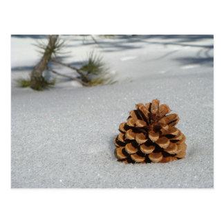 Pinecone on the Snow Postcard