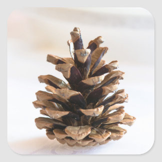 Pinecone Square Sticker