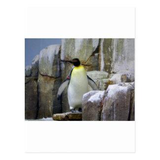 Pingouin fier carte postale