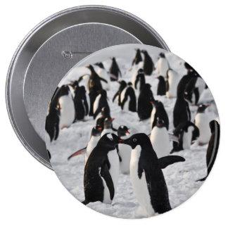 Pingouins au jeu macaron rond 10 cm