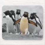 Pingouins de Rockhopper Tapis De Souris