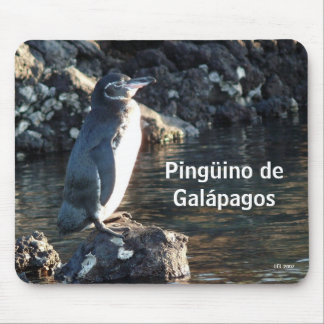 Pinguino de Galapagos Mouse Pad